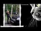 «Котенок бродячей жизни моей» под музыку Королёва Наташа и Николаев Игорь - Котёнок. Picrolla